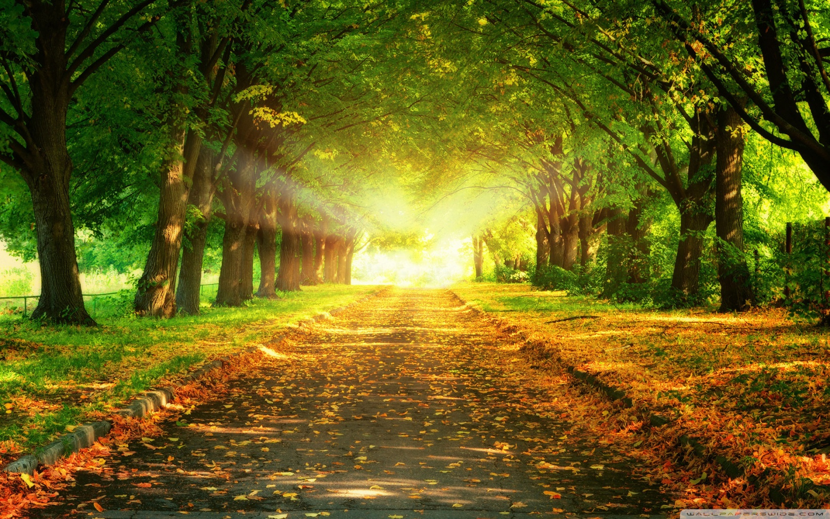 autumn_path-wallpaper-1680x1050